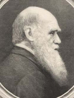 Charles Robert Darwin (1809-1882), by unknown engraver, 1882